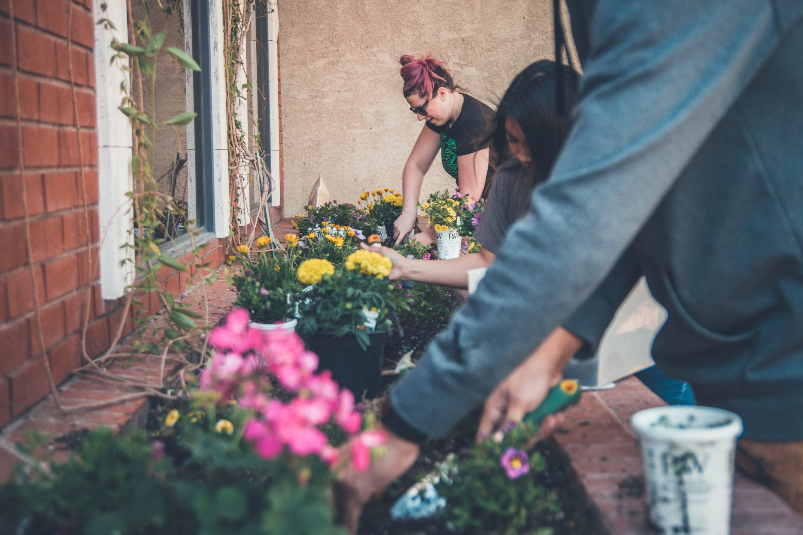 A group of people gardening in flowerboxes